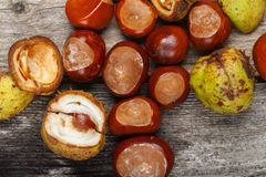 Chestnut on the table. Chestnut on the vintage wooden table stock photos