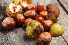 Chestnut on the table. Chestnut on the vintage wooden table stock image