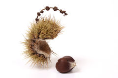 Chestnut on white Stock Photos