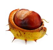 Chestnut on white Stock Photography