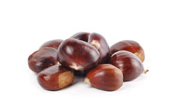 Chestnut  on a white background Stock Images