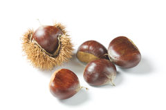 Chestnut on white background. Fall composition Stock Photo