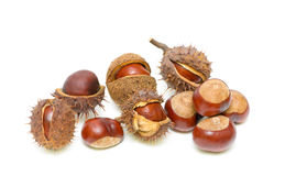 Chestnut on a white background Royalty Free Stock Photography