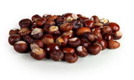 Chestnut  white background. The core of the fruit chestnut on wooden substrate Stock Image