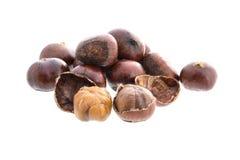 Chestnut,  on white background Stock Image