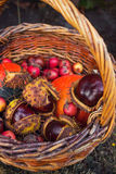 Chestnut in wicker basket Stock Photo