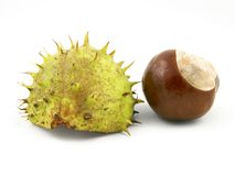 Chestnut With Shell Stock Image