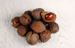 Chestnut on wooden substrate. The core of the fruit chestnut on wooden substrate Stock Image