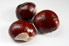 Chestnuts. Three chestnuts on white background Stock Images