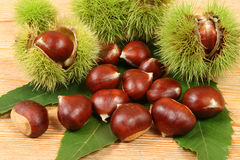 Chestnuts. Royalty Free Stock Images