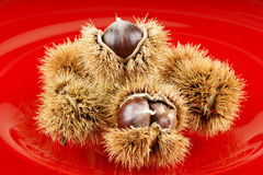 Chestnuts. In a red plate Stock Photography