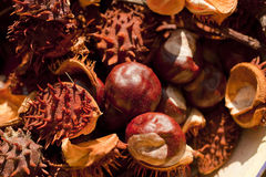 Chestnuts. Mary chestnuts (nuts and peel) on a plate Stock Images