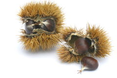 Chestnuts. Cropped some chestnuts still in the pericarp Royalty Free Stock Images