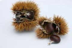 Chestnuts. Cropped some chestnuts still in the pericarp Stock Photo
