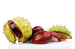 Chestnuts. Isolated on white background Stock Photography