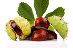 Chestnuts. Isolated on white background Royalty Free Stock Photography