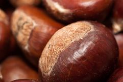 Chestnuts Stock Images