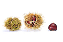 Chestnuts. Some chestnuts in its shell isolated on a white background Stock Photos