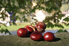 ...chestnuts... Royalty Free Stock Photos
