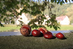 ...chestnuts... Stock Photo