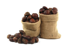 Chestnuts. Royalty Free Stock Photo