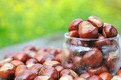 Chestnuts Royalty Free Stock Photos