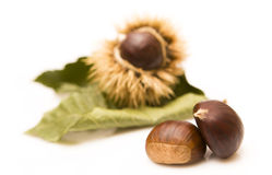 Chestnuts. And an open husk  on white - Focus on the Royalty Free Stock Image