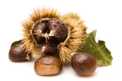 Chestnuts. In a husk  on white Royalty Free Stock Photography