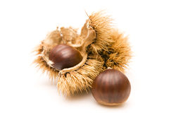 Chestnuts. And an open husk  on white Stock Image