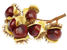Free Chestnuts Royalty Free Stock Photos - 21850608
