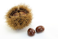 Chestnuts. These are the chestnuts have been picked up in the mountains in the fall Stock Photos