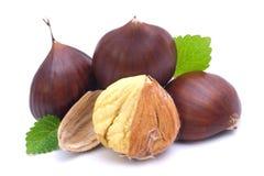 Chestnuts. Fresh chestnuts on white ground Royalty Free Stock Photos