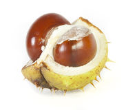 Chestnuts. On white in studio Royalty Free Stock Image
