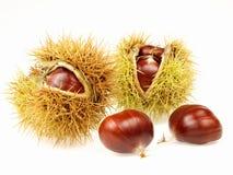 Chestnuts. Autumn fruit arranged on white background Stock Photo