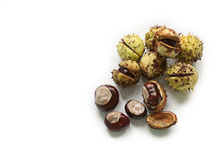 Chestnuts. Four chestnuts on a white foreground some of them inside its shell Stock Photos