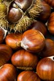 Chestnuts. Closeup of a pile of sweet Stock Images