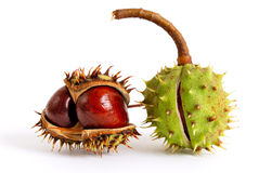 Chestnuts. Two chestnuts in a peel on a white background Stock Photography