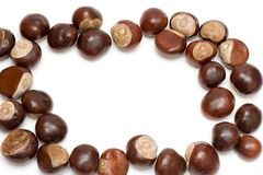 Free Chestnuts Royalty Free Stock Photo - 3348765