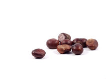 Chestnuts. Eight big, brown isolated cehstnuts Stock Photo