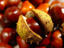 Chestnuts. Fall fruits Stock Image