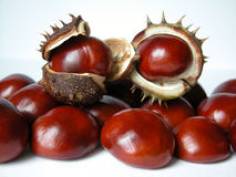 Chestnuts. Composition of chestnuts Stock Images