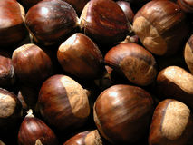Chestnuts. Close up of fresh chestnuts royalty free stock photo
