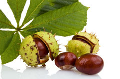 Chestnuts. Isolated on white background royalty free stock photo