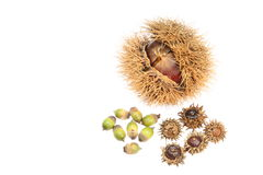 Chestnuts and acorn. I have taken pictures of chestnut and acorn to represent the atmosphere of the autumn Stock Photography