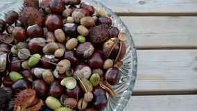 Chestnuts and acorn. A number of chestnuts and acorns in a bowl Royalty Free Stock Images