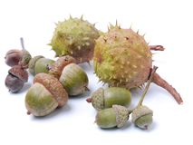 Chestnuts and acorns Royalty Free Stock Image