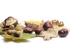 Chestnuts, acorns and fall leaves Royalty Free Stock Photos