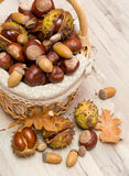 Chestnuts and acorns in a wicker basket. Mature acorns and chestnuts in a wicker basket close-up. vertical photo Stock Image