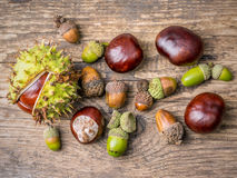 Chestnuts and acorns Stock Photo