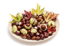 Free Chestnuts And Autumn Leaves Royalty Free Stock Photos - 16310818